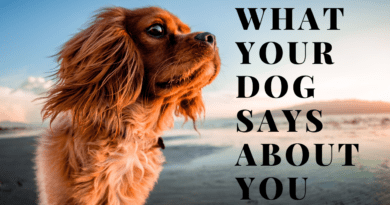 what your dog says about you ?