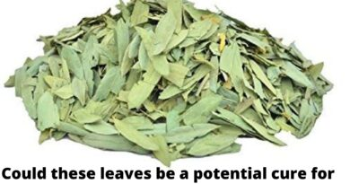 Senna tea – A potential cure for Covid-19 as claimed by Dr Nazir from UK.